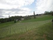 Weingut Perner Weingarten