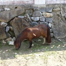 Pony im Töchterlehof
